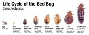 where-do-bed-bugs-come-from